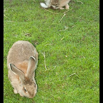 Watership Down by timtopping