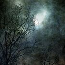 Late November by Mary Ann Reilly