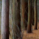 Pines by Lynn Wiles