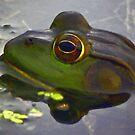 Frog in Pond by artstoreroom