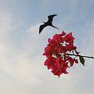 Frigate Bird with Bougainvillea - Fregata, Puerto Vallarta, Mexico by PtoVallartaMex