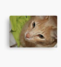 Playful Cat  Canvas Print