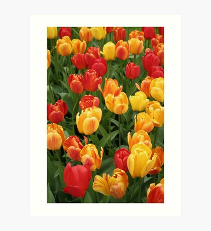 Keukenhof Tulips Art Print