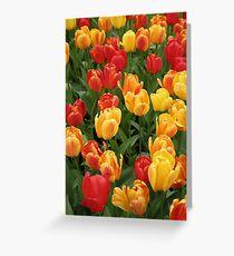 Keukenhof Tulips Greeting Card