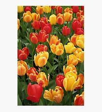 Keukenhof Tulips Photographic Print