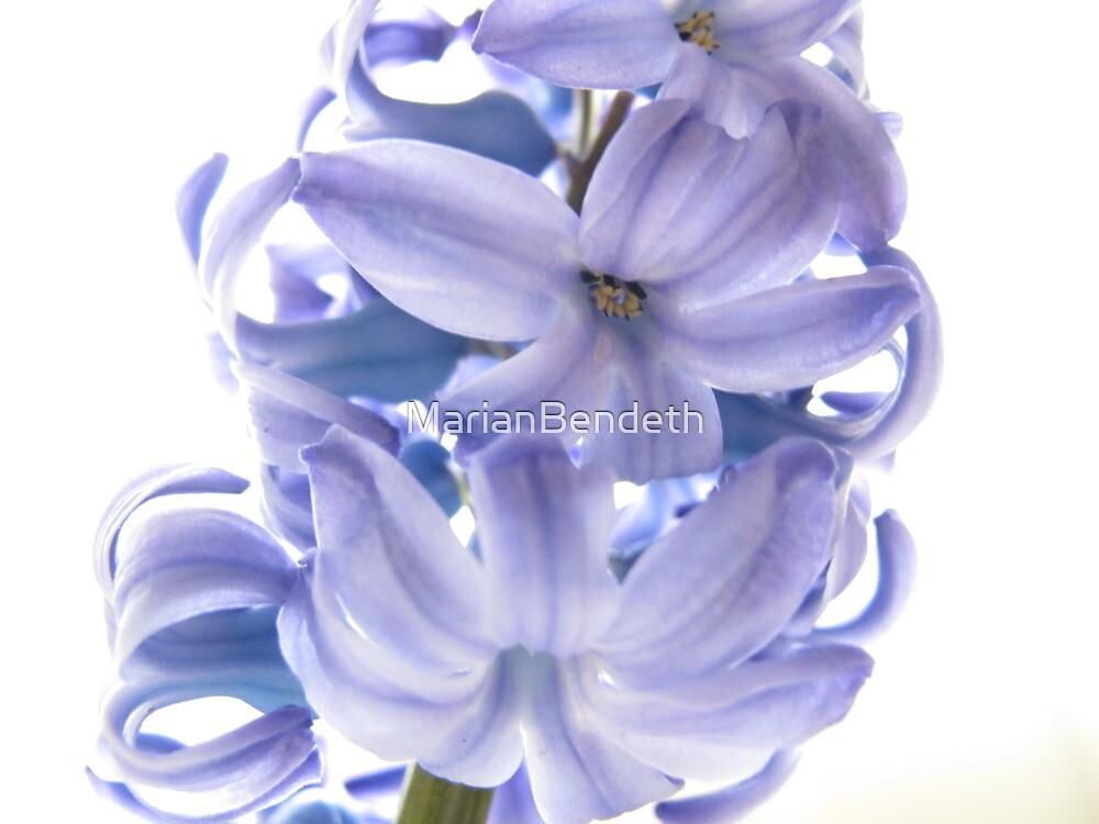 High octave hyacinth by MarianBendeth