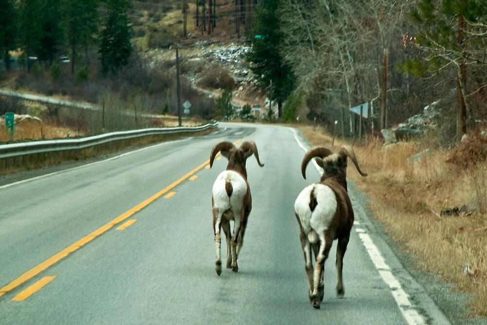 Montana Road Hazard by Bryan D. Spellman