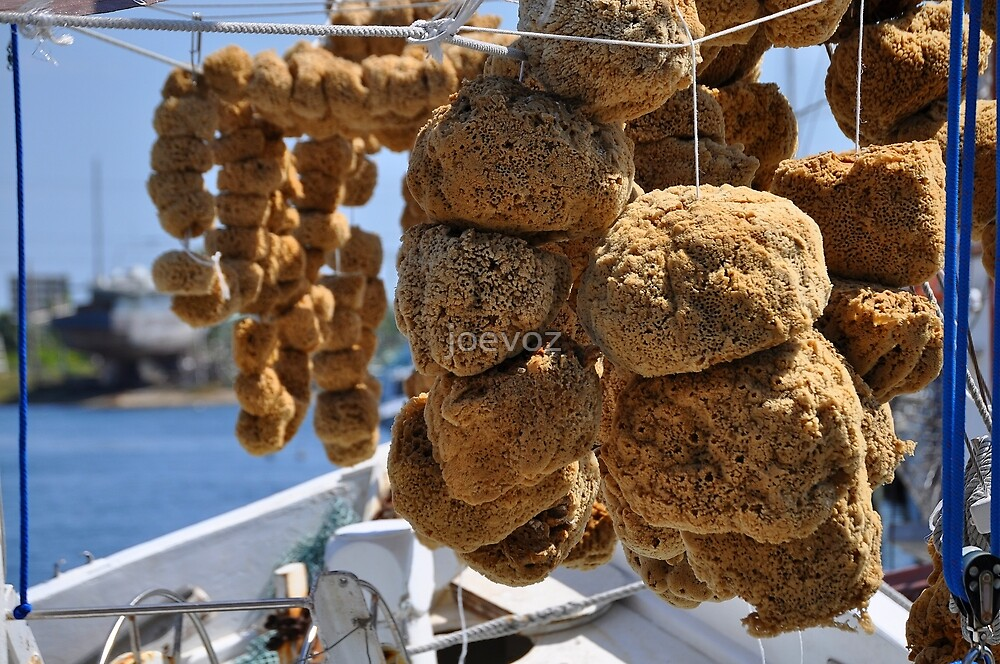Sponges by joevoz