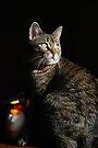 Tasha & Penguin by jodi payne