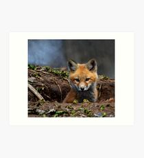 Kit Fox Art Print