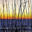 Sea Oats at Sunrise by Robin Black