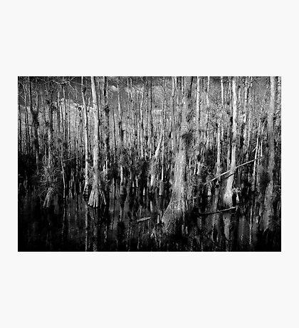 Cypress #4 Photographic Print