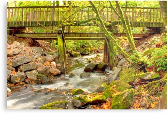 Mossy Old Bridge by Dale Lockwood