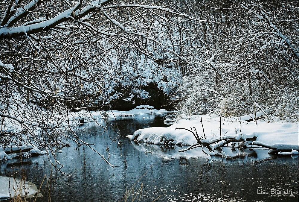 Winter Stillness by Lisa Bianchi