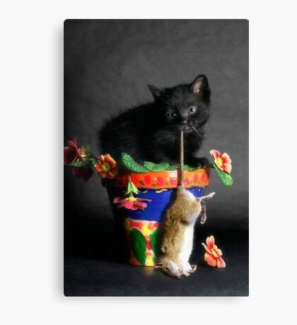 Rat Cat Canvas Print