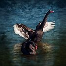 """Black Swan Lake"" by Heather Thorning"