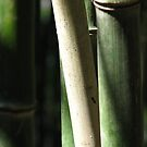 Bamboo by leslie wood