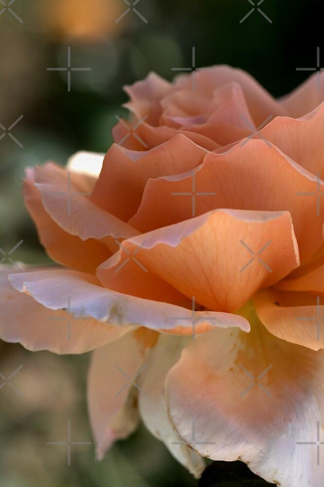 Orange Twinkle by Joy Watson