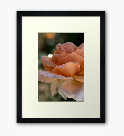 Orange Twinkle Framed Print