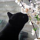 Black cat Droppie  by patjila