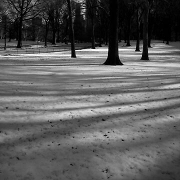 fresh snow, central park, nyc by bodhiimages