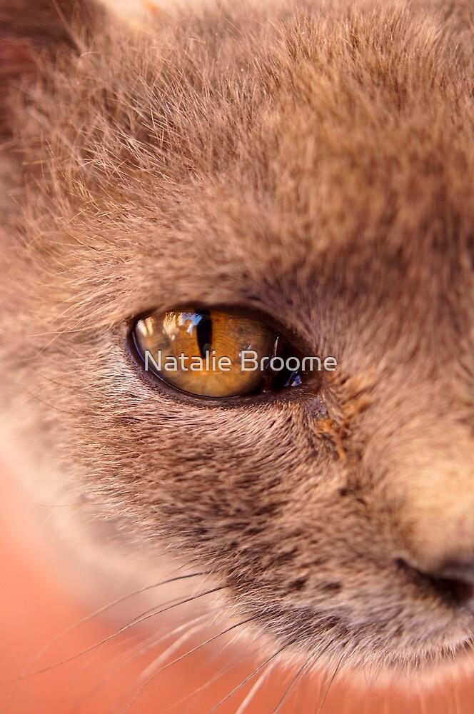 Moroccan Feline by Natalie Broome
