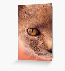 Moroccan Feline Greeting Card