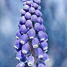 The Grapes of Spring by PhotosByHealy