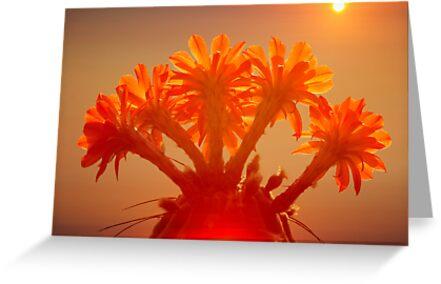 Desert Flower by JonnisArt