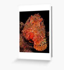 Scorpionfish Portrait Greeting Card