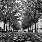 Fall by Manolya  Fumero