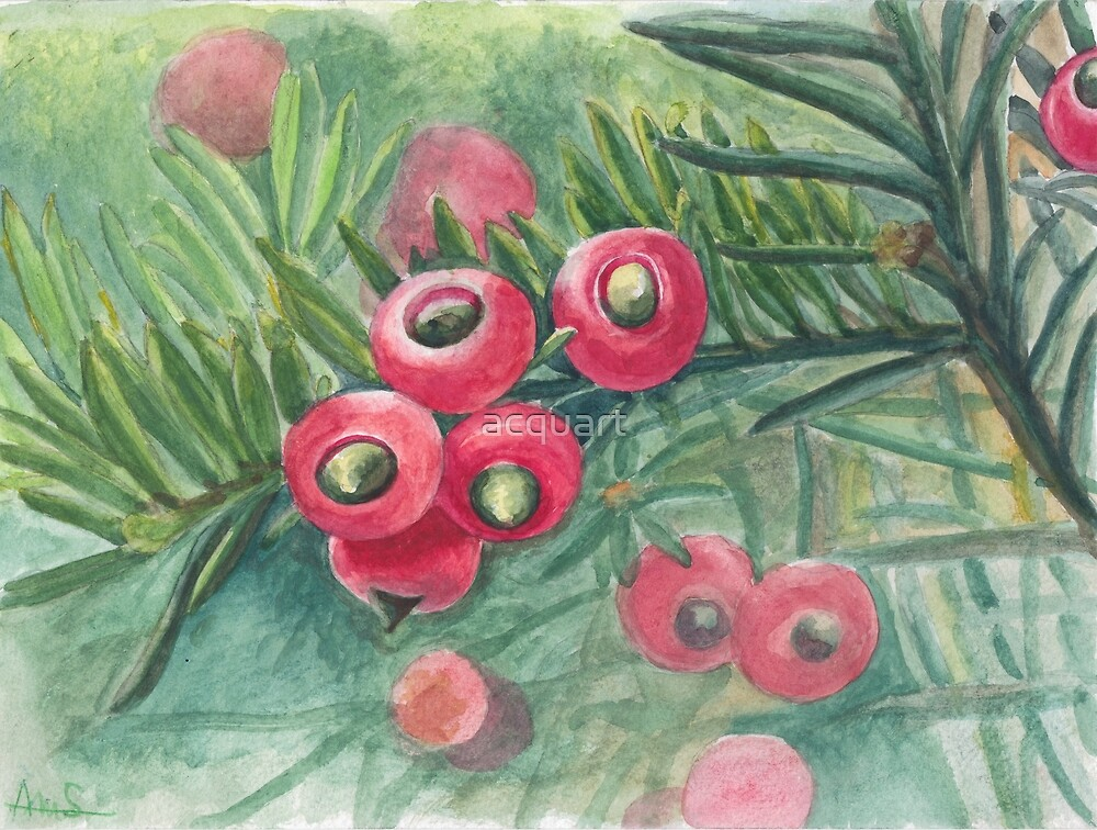 Berries by acquart