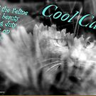 Cool Cats by Angele Ann  Andrews