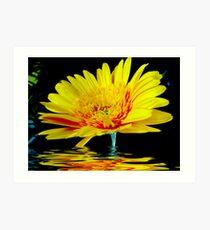 Yellow Gerbera Art Print