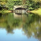 REFLECTIONS by deegarra