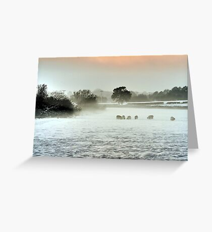 Sheep in a winter mist Greeting Card
