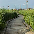 On the Boardwalk by John Velocci