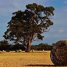 Hay in Field  by brendanscully