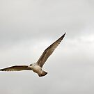 Young Gull by Gary Rayner