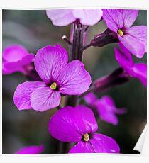 Macro Pink Flowers Poster