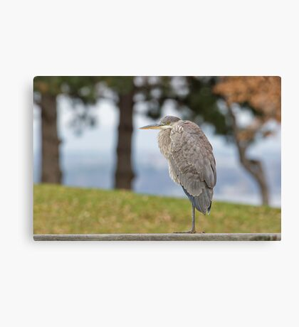 Checking out the scenery Canvas Print