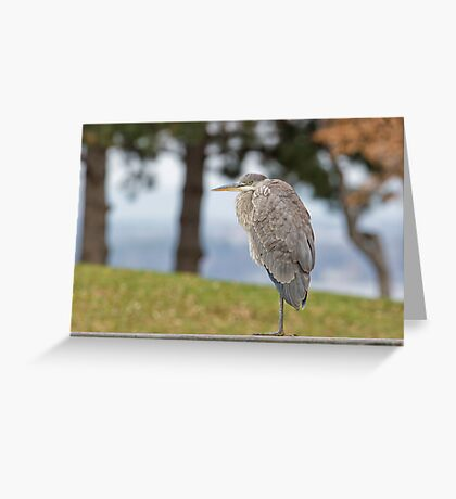 Checking out the scenery Greeting Card