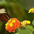 Wings Of Wonder by Nick Boren