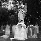 Angel by David Lamb
