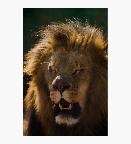 Lion's Laugh  Photographic Print