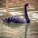 The Black Swan by Kahlia Huddleston