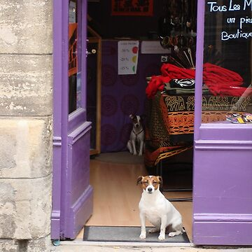 Minding The Shop - Two French Dogs In Boutique by MenegaSabidussi