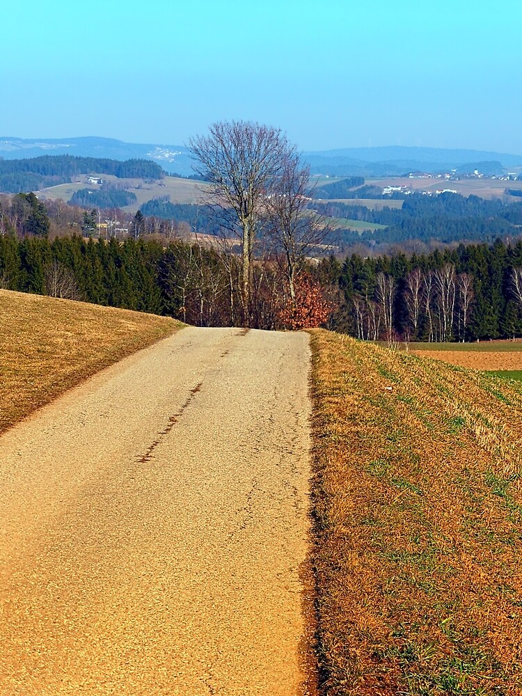Tree in the middle of the road   landscape photography by Patrick Jobst