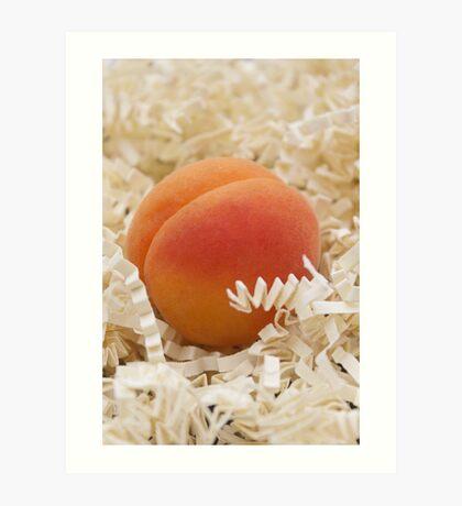 Apricot Art Print