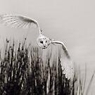 """""""Night Owl"""" by peaky40"""